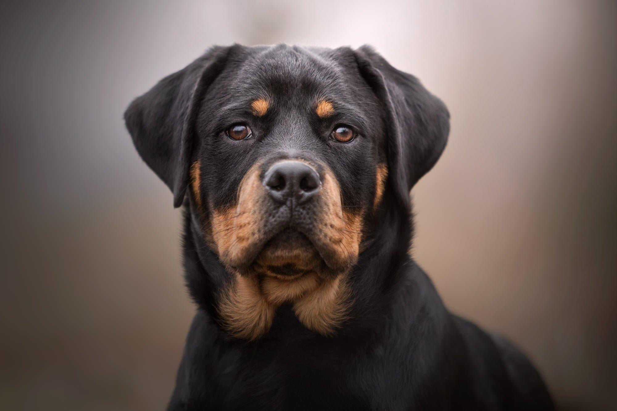Ritratto fotografico per animali domestici