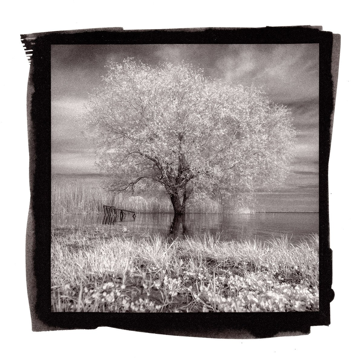 Fotografia infrarossa