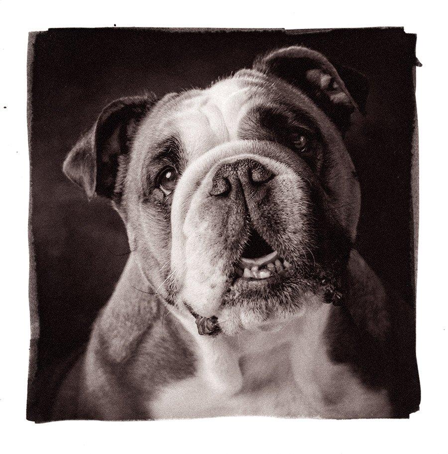 ritratto fotografico per cani